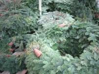 Wreaths (Mixed)