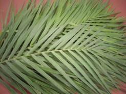 Emerald Palm