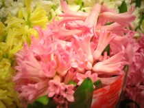 images_fresh_hyacinth_pink_2