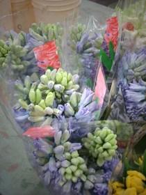 images_fresh_hyacinth_purple