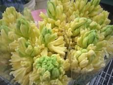 images_fresh_hyacinth_yellow_1