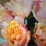 Campanella (Peach)