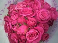 Hot Pink Folies