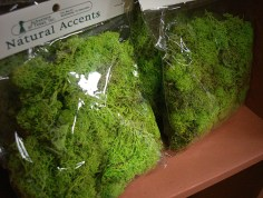 Moss (Schusters)