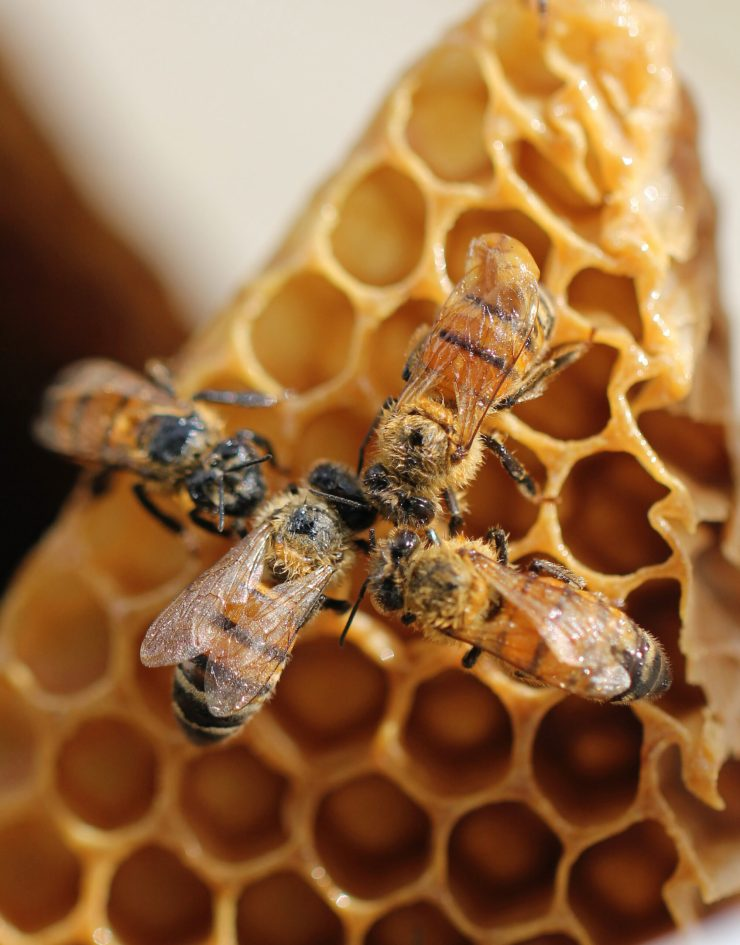VegNews.HoneyBees