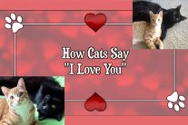 How Cats Say I Love You