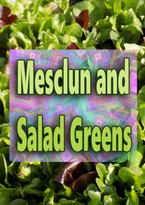 Mesclun and Salad Greens