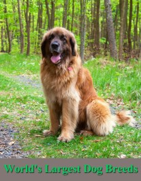 Check Out The World's Largest Dog Breeds
