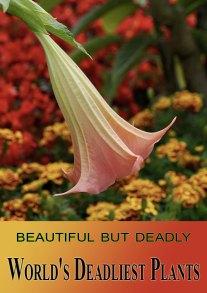 11 of the World's Deadliest Plants
