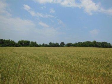 eagle-point-farms