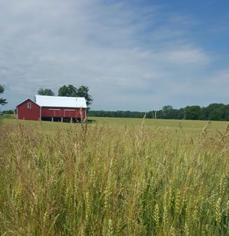 Frier Farm