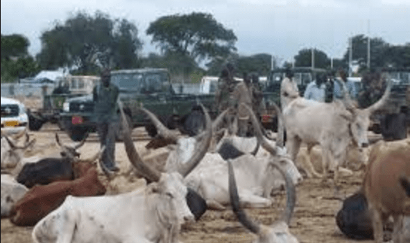 The End of Cattle Raids in South Sudan