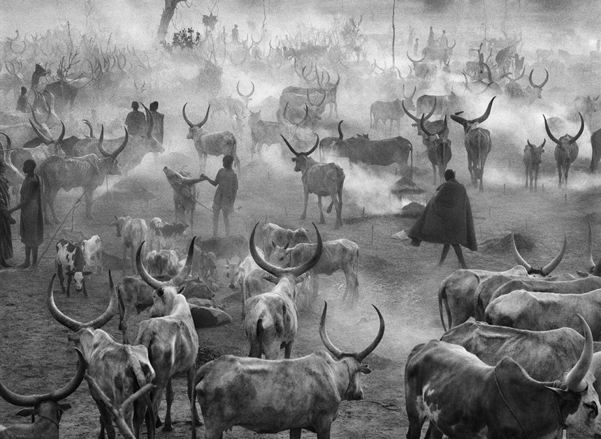 A cattle camp in an unidentified location in South Sudan (File/Supplied/Nyamilepedia)