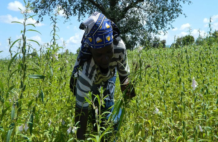 IFAD partners South Sudan in over $19 million worth project to boost agriculture