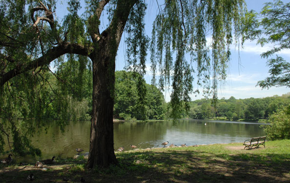 a lakeside view of a forested area in Van Cortlandt Park
