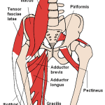 Adductor Longus Sprains and Tears (Athletic Pubalgia)