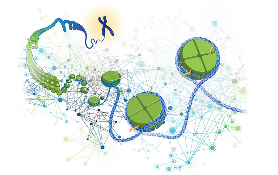 NIH Genome Illustration