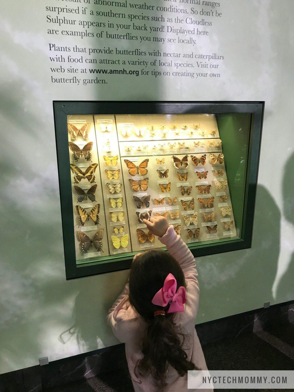 Butterflies at AMNH