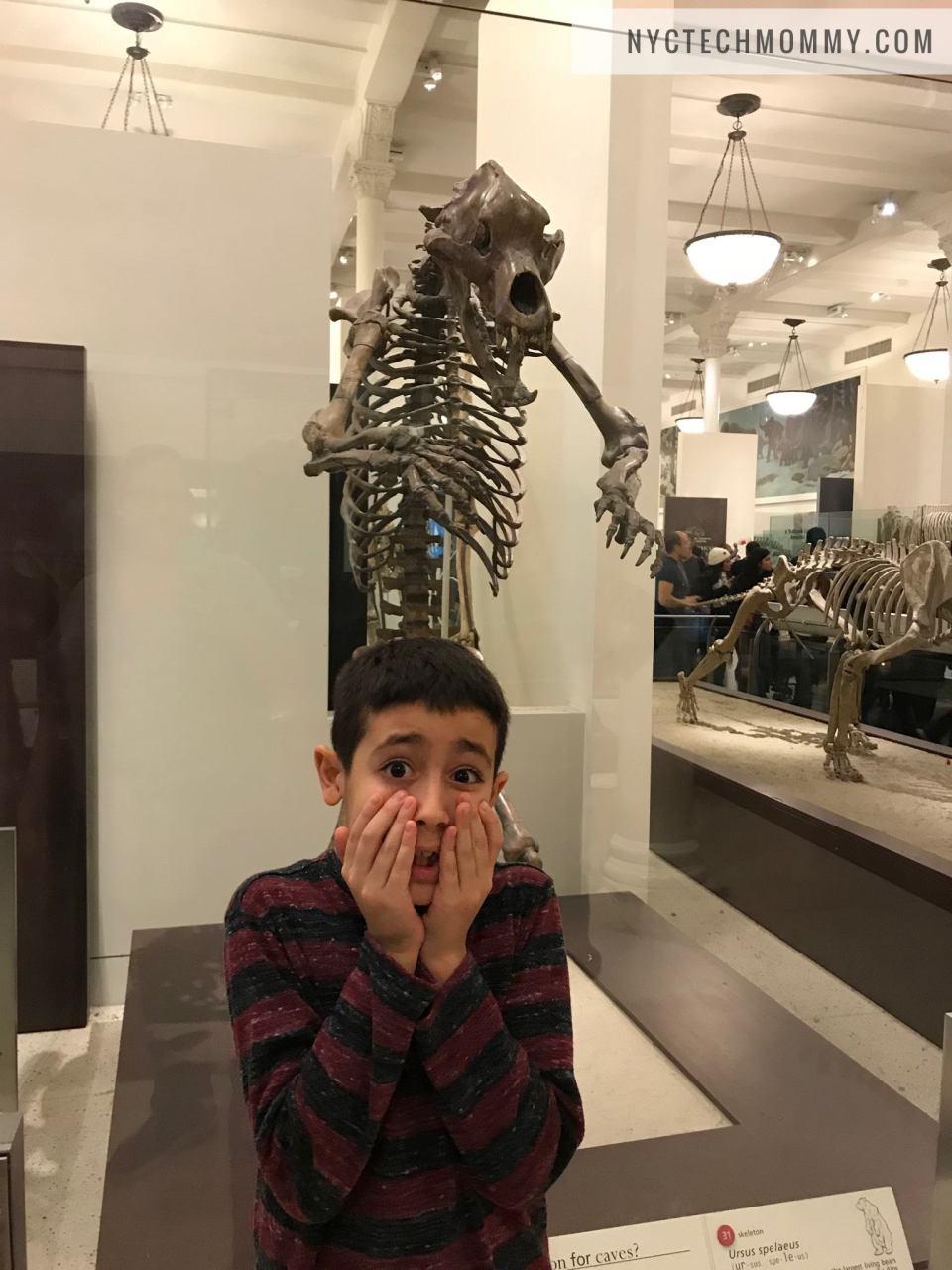 Mammals at AMNH