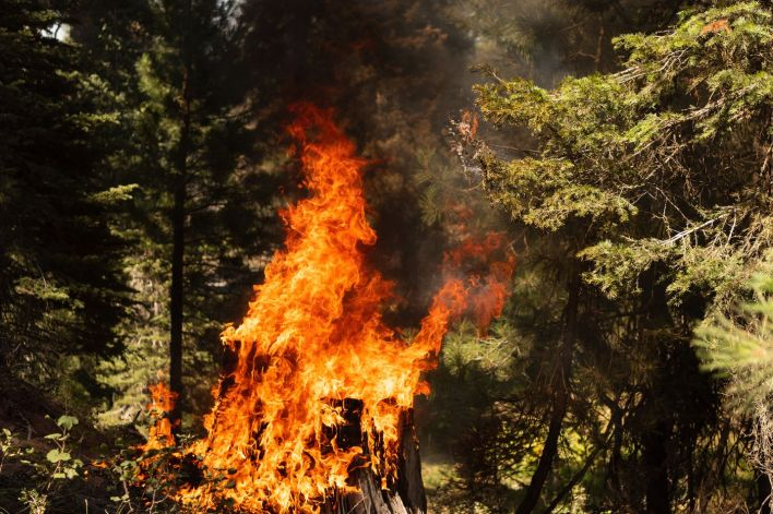 A tree stump is engulfed in flames in the Bravo Bravo section of the Bootleg Fire on July 21, 2021, in the Fremont National Forest of Oregon. The Bootleg Fire, which started on July 6 near Beatty, Oregon, has burned over 395,000 acres and is currently 38% contained.