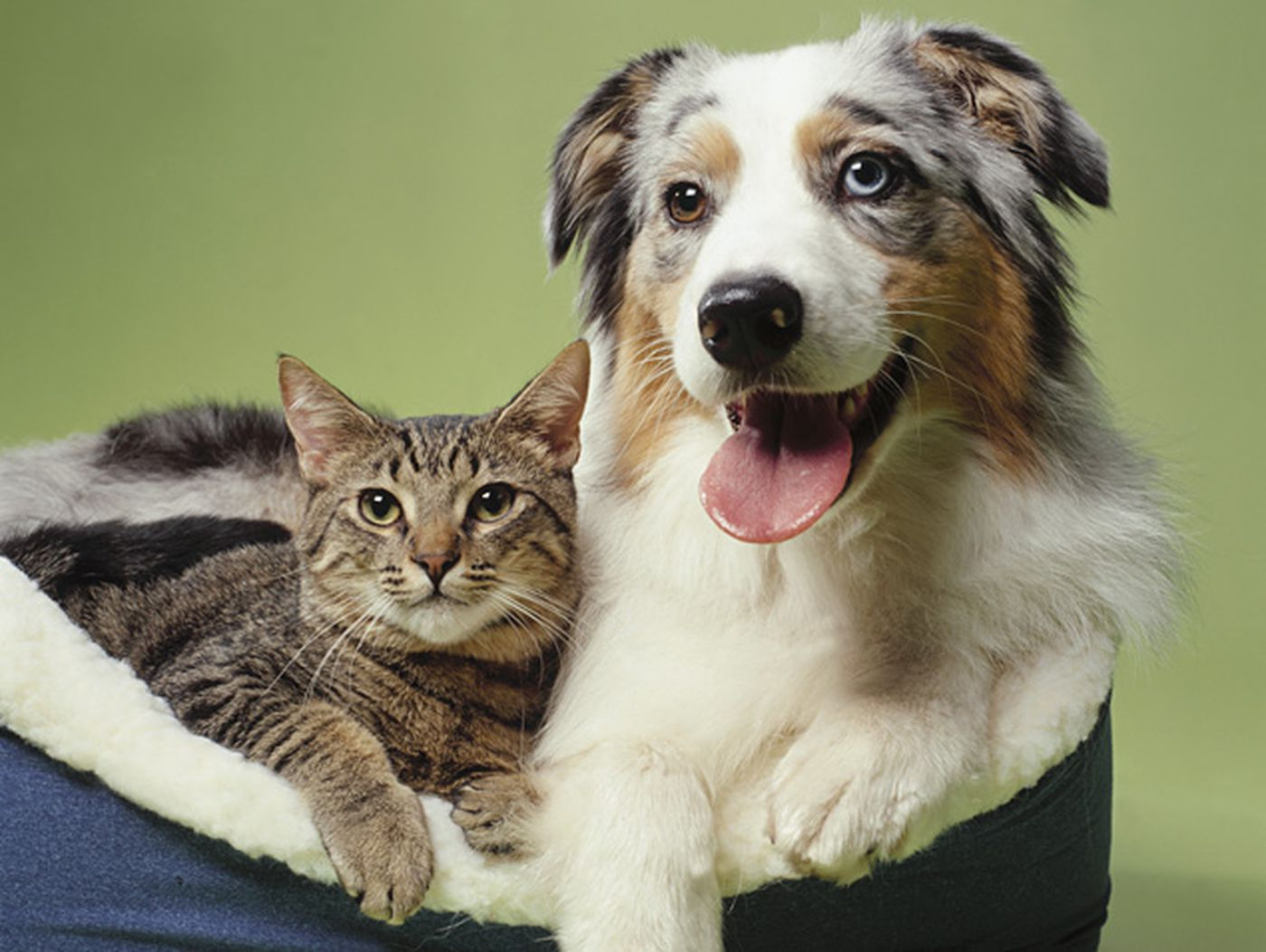 Cats Vs Dogs Which Pet Is Smarter
