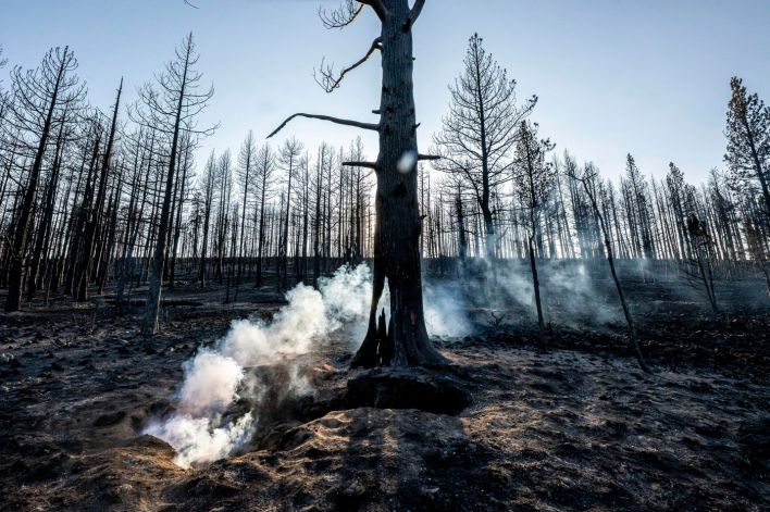 Spot fires smolder near trees damaged by the Bootleg Fire on Wednesday, July 21, 2021, in Bly, Ore.