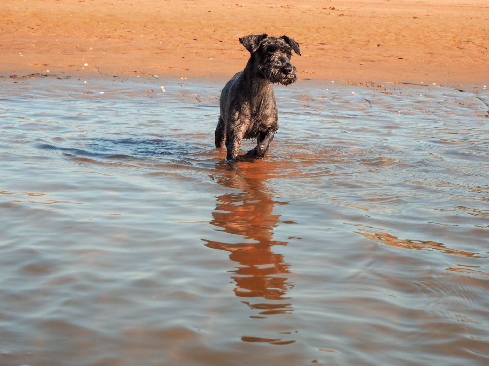 blog, perro