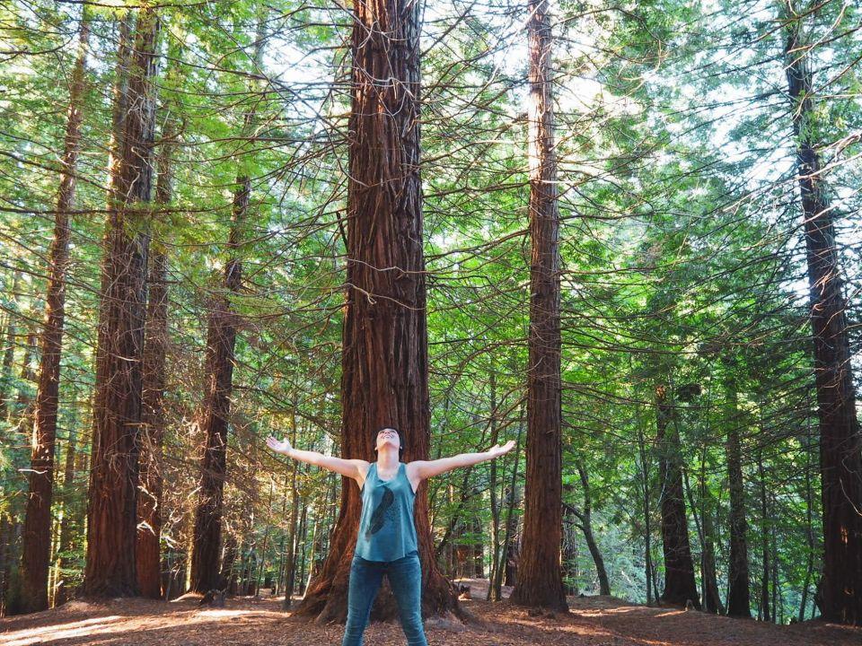 sequoia, árbol gigante, quiénes somos