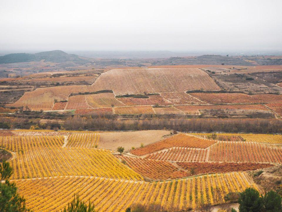 Rioja Alta, viñedos