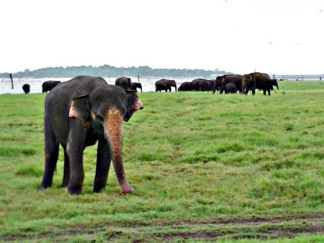 Fun Things to See, Eat and Do in Sri Lanka - Kaudulla National Park