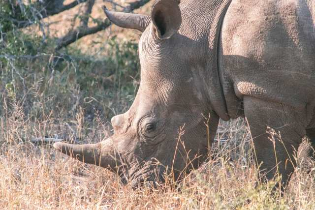 Would Be Traveller 10 Places to see wildlife South Africa Rhino