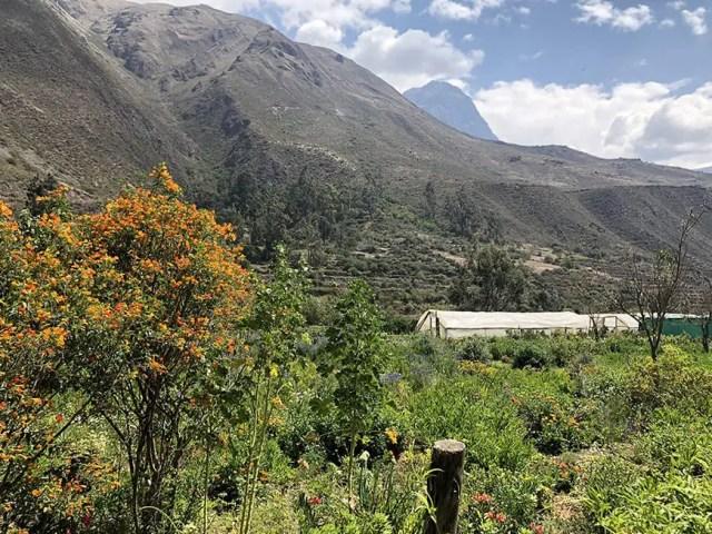 el albergue ollantaytambo - farm