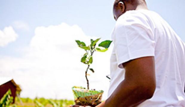 plant-a-tree-nyota-1