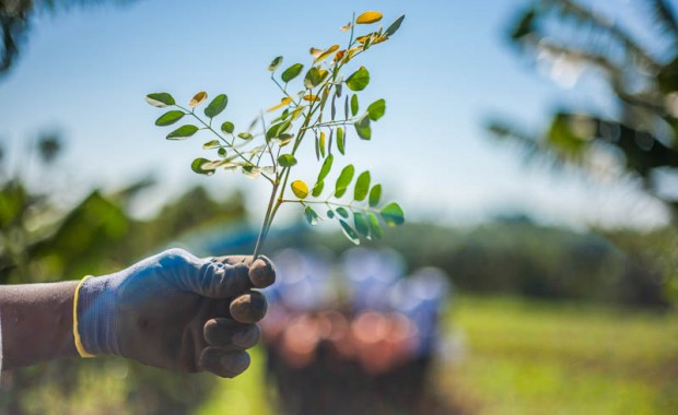 1410_Nyota_Tree_Planting-7755