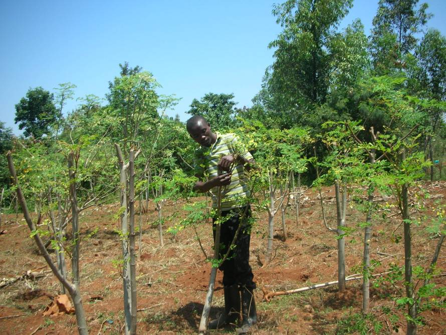 prunned-moringa-in-plot-a-1