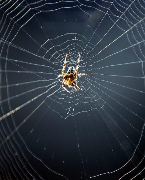 Edderkoppene i velferdssystemet