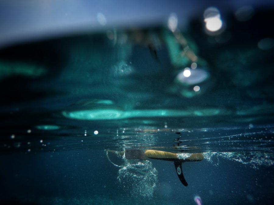 シングルフィンの魅力を知ろう