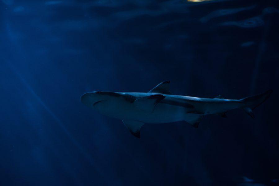 サーフトリップ先別サメによる事故件数調査