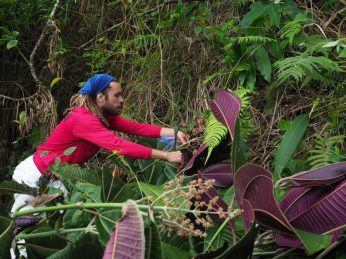 We remove and bag fruits from mature plants and take them to HECO to burn.