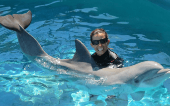 Oahu Dolphin Trainer Hawaii