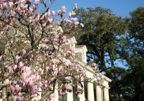Oak Alley Plantation Antebellum Mansion Historic Grounds