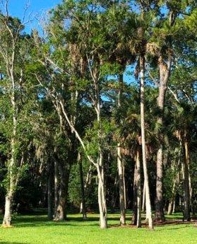 Alta Mar Park Trees