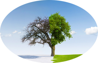 Business Change and Transformation, Oak Consult