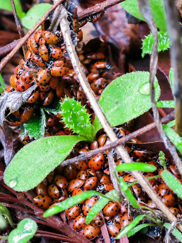 Ladybug Vertical 1