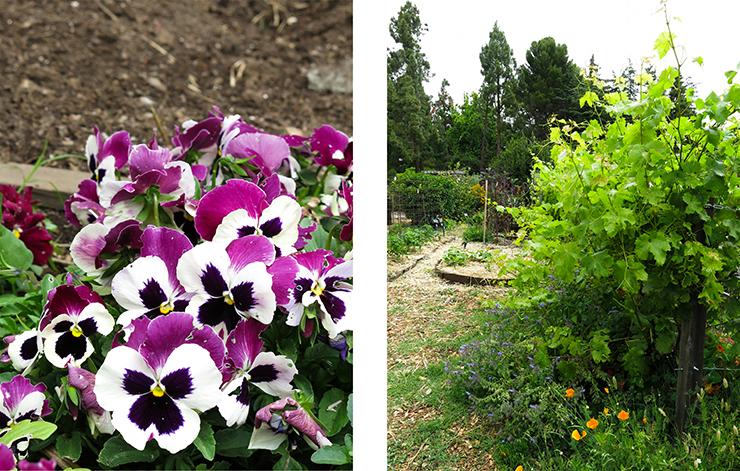 LM Garden 11