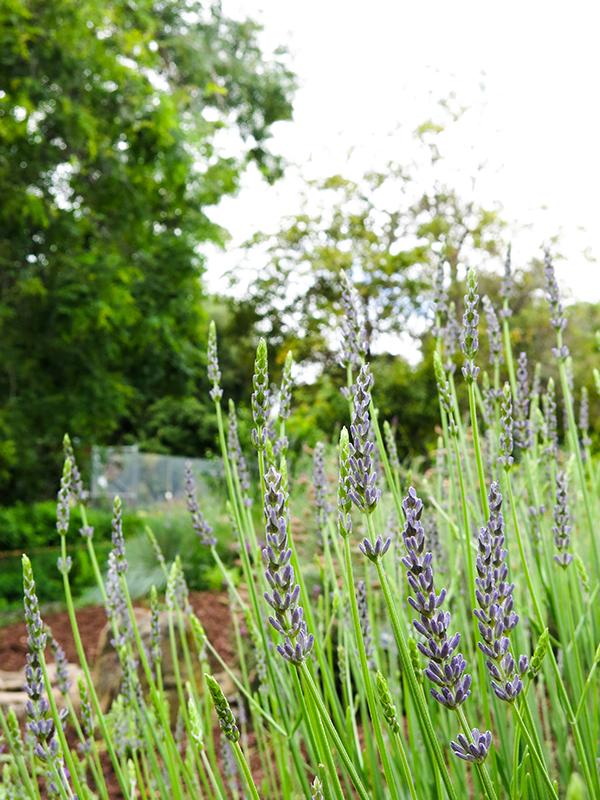 LM Garden 13