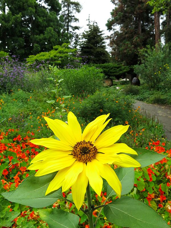 LM Garden 5