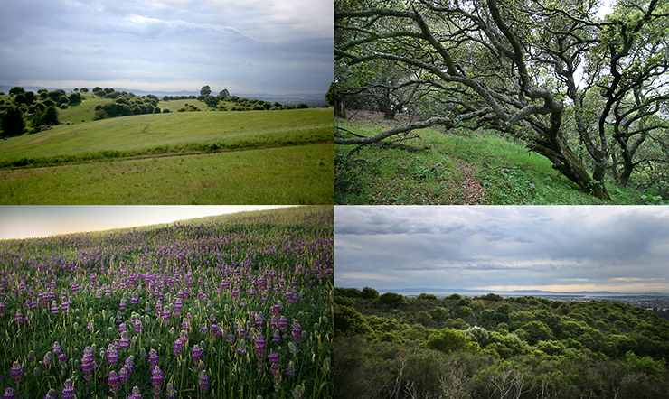 Knowland Collage