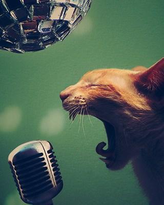 oakley singing