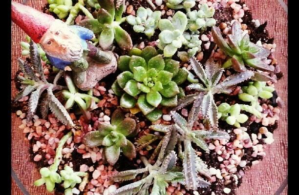 OakMonster.com - Franklin's new succulent terrarium